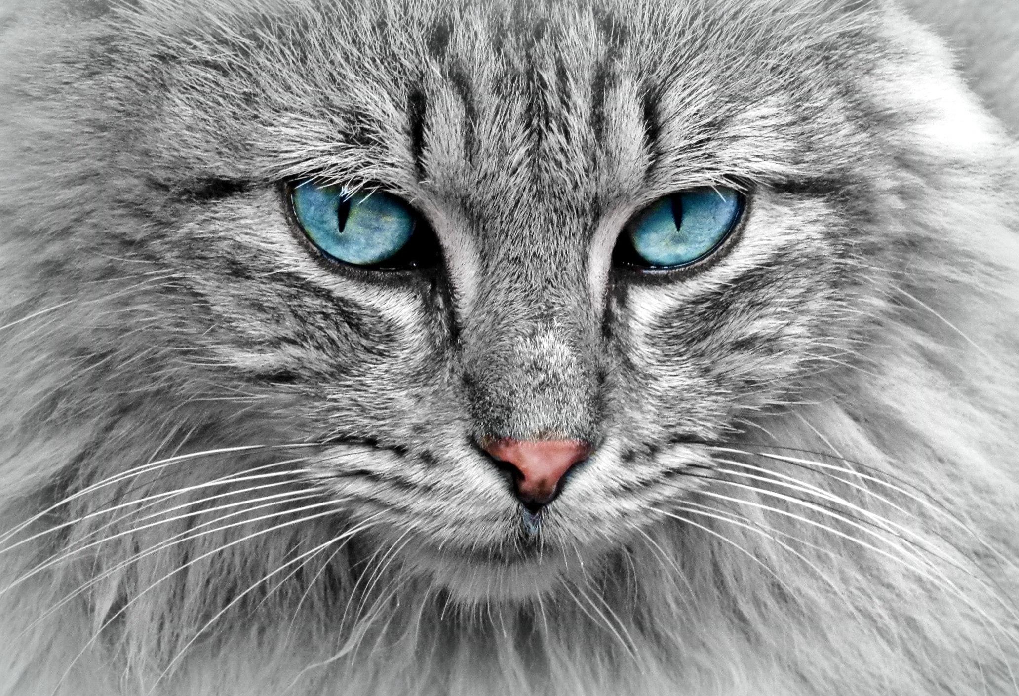 animal-cat-eyes-33537
