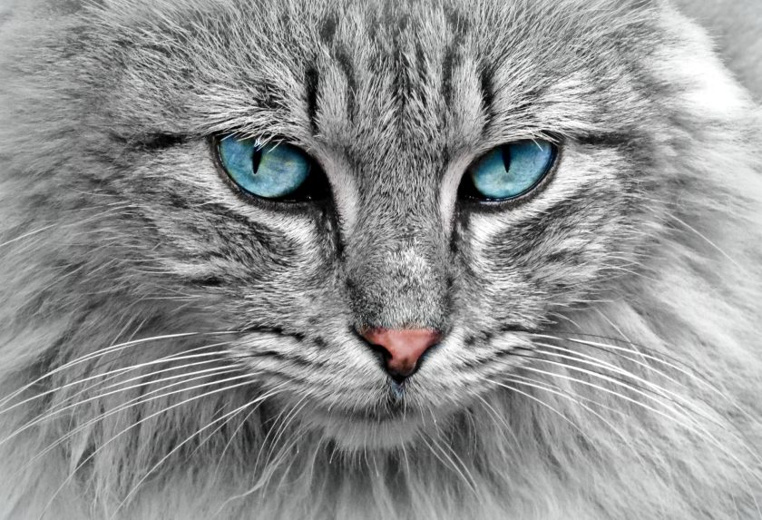 animal-cat-eyes-33537